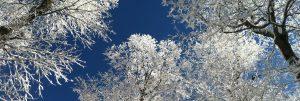 Snowy Trees 2018